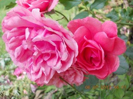 FOTKA - Léto - 12 - růžová krása