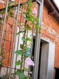 FOTKA - červenec - 14 - růžový kvítek