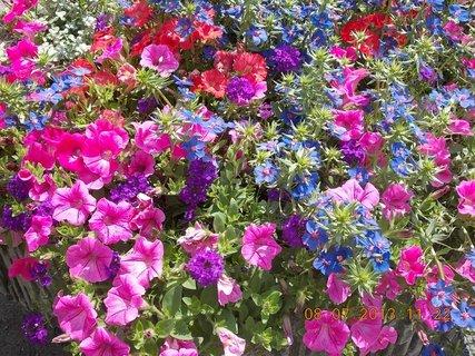 FOTKA - červenec - 15 - samé krásné květy