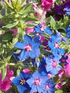 FOTKA - červenec - 16 - samé krásné květy