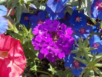 FOTKA - červenec - 17 - samé krásné květy
