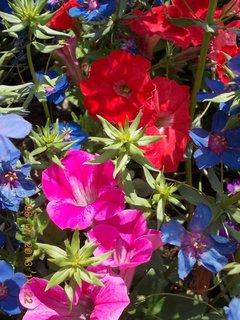 FOTKA - červenec - 18 - samé krásné květy