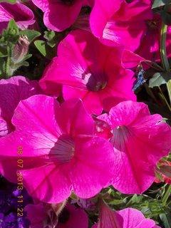 FOTKA - červenec - 19 - samé krásné květy