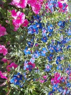 FOTKA - červenec - 20 - samé krásné květy