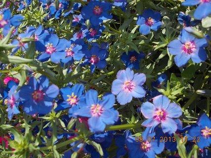 FOTKA - červenec - 21 - samé krásné květy