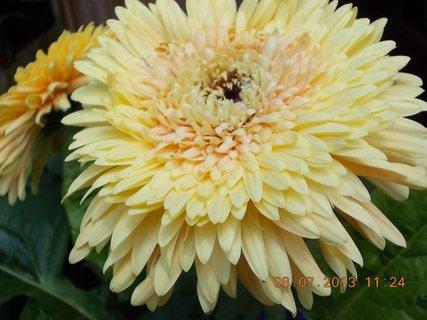 FOTKA - červenec - 22 - samé krásné květy