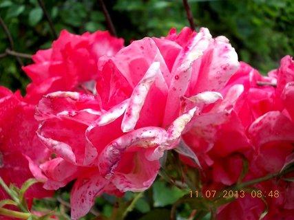 FOTKA - červenec - 23 - samé krásné květy