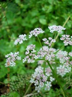 FOTKA - červenec - 24 - samé krásné květy