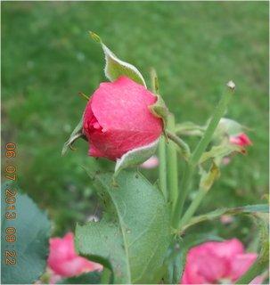 FOTKA - červenec - 25 - samé krásné květy