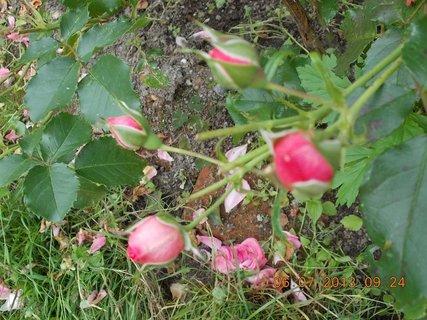 FOTKA - červenec - 26 - samé krásné květy