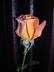 Růžička2