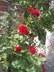 Tohle jedinné mi kvete na zahradě