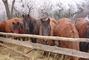 Koně na Zmrzlíku