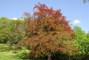 Strom na Petříně