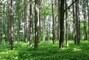 Les v Kuchaři