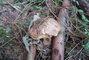 houbičky v lese ,,
