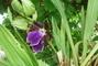 tatínkova orchidea,,