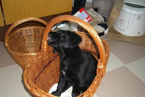 FOTKA - Sára v košíku