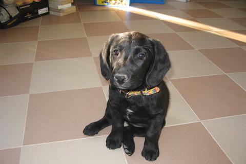 FOTKA - náše  psí miminko Sára
