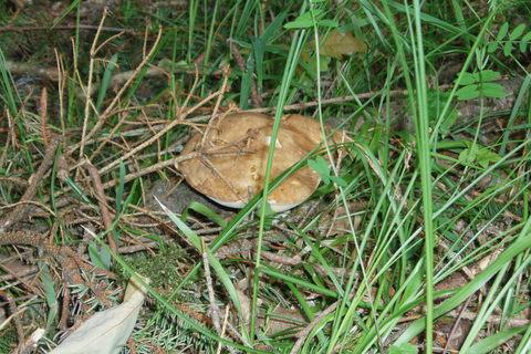 FOTKA - houbičky v lese