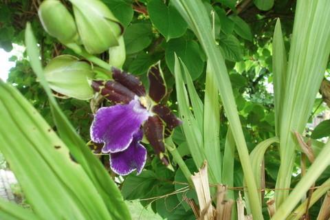FOTKA - tatínkova orchidea,,
