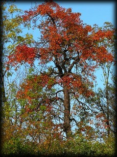 FOTKA - podzim1a
