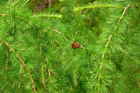 FOTKA - šiška na stromě