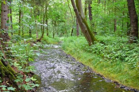 FOTKA - potůček v lese1