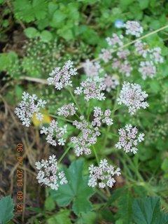 FOTKA - červenec - 2 - 11 - plevelní kvítí