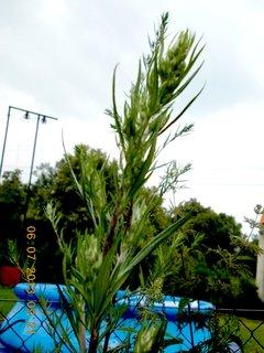 FOTKA - �ervenec - 2 - 13 - plevel a� k nebi si roste