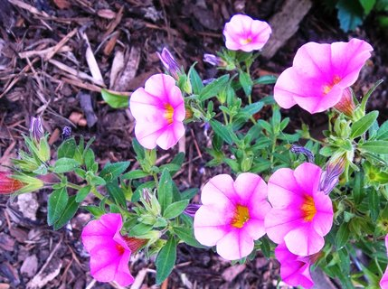FOTKA - květinka focená na procházce.. .