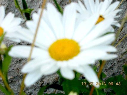 FOTKA - sobotní procházka - 3
