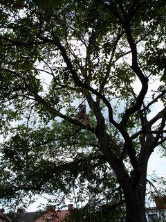 FOTKA - zpátky do stromů
