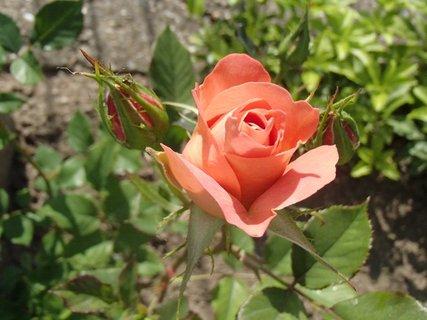 FOTKA - oranžový puk