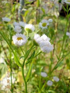 FOTKA - 11.července - 12 - plevelní kvítka