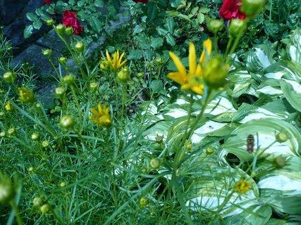 FOTKA - v zahradě 13