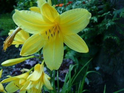 FOTKA - Žluté květy 8