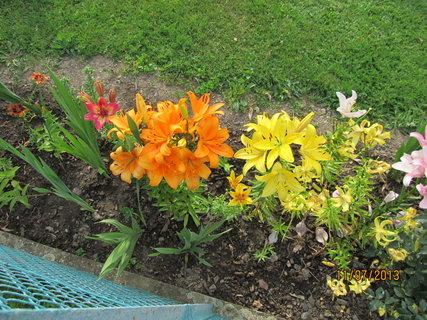 FOTKA - Lilie za plotem