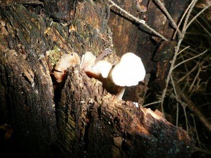 FOTKA - Houby v lese 10