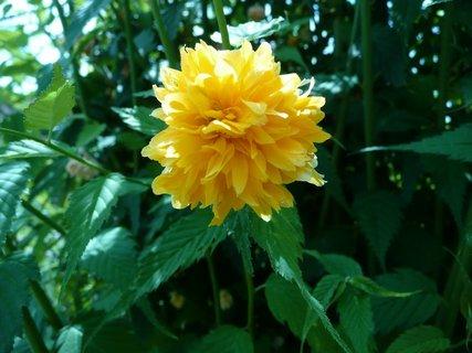 FOTKA - Žluté květy 10
