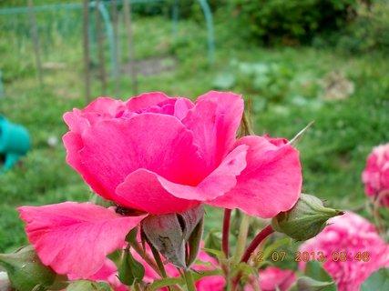 FOTKA - letní krása-2