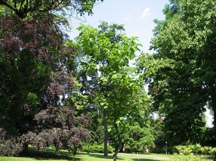 FOTKA - Léto v Královské zahradě 15