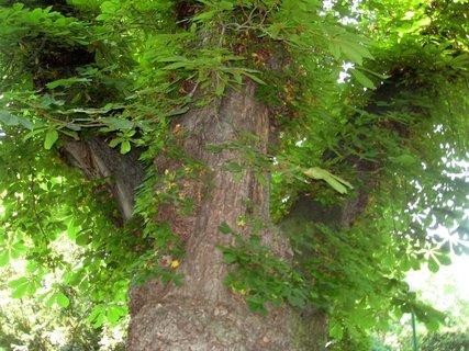 FOTKA - Léto v Královské zahradě 17