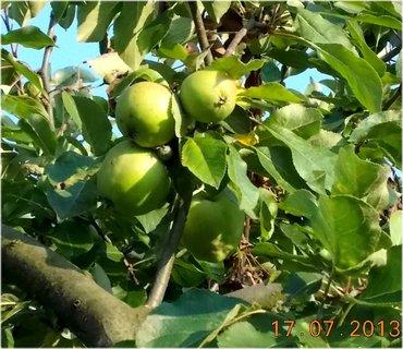 FOTKA - 17 +18.7. - 5 - jablíčka