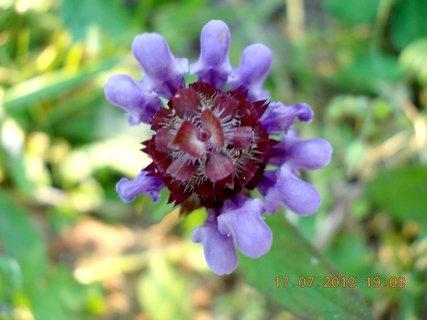 FOTKA - 17 +18.7. - 8 - v trávě