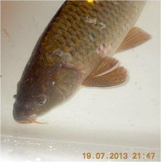 FOTKA - 18 - 20.7. - 11 - od kamaráda rybáře