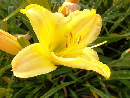 FOTKA - žlutý květ ...