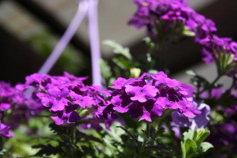 FOTKA - fialový..+