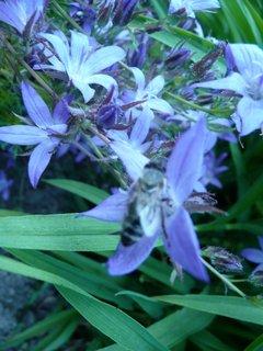 FOTKA - Modré kvítky 3