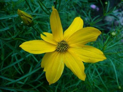 FOTKA - Žluté květy 11